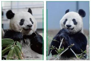 上野のパンダのシャンシャンの2歳の誕生日を記念したイベント「ハッピーパンダフルデイズ」