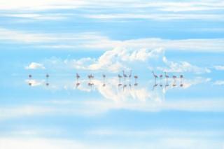 """地球と生きものの姿を""""水""""を切り口に撮影した高砂淳二氏の写真展「PLANET of WATER」"""