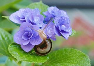 日本各地の名産品などが賞品として用意された「季節到来!ふるさと紫陽花フォトコンテスト2019」