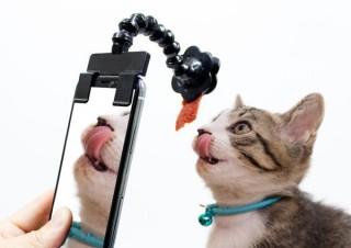 ペットが夢中になる! かわいい姿をアップで撮影できる!「ペット自撮りスティック」発売