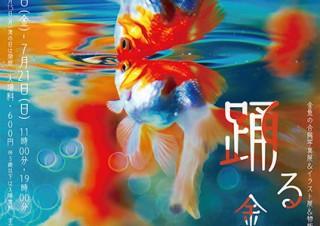金魚の写真やイラストやグッズを集めた企画展で風鈴なども登場する「踊る金魚展」