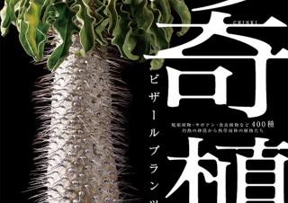 気になるフォント、知りたいフォント。| 書籍『珍奇植物 ビザールプランツと生きる/藤原連太郎、shabomaniac!』(2019.9.5)