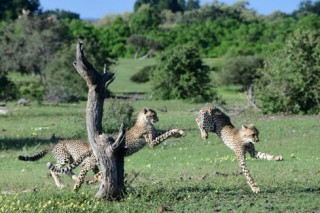 厳しくも美しい大自然に生きる野生動物の輝きが撮影された山形豪氏の写真展「SAFARI」