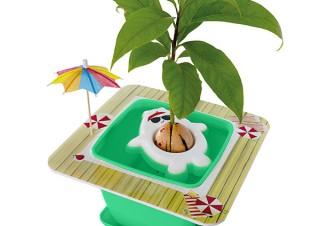 Gloture、アボカドが簡単に育つ栽培キットAvoSeedo 2.0発売