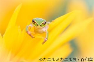 美しいカエルの世界観で会場が埋め尽くされる合同写真展&物販展「カエルミカエル展」