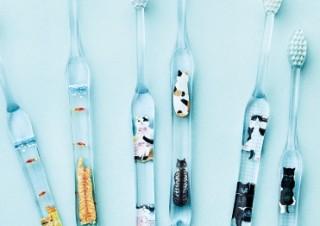 """表も裏も楽しめる!""""猫あるある""""を詰め込んだ歯ブラシが『フェリシモ猫部™』から新登場"""
