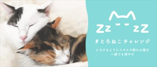殺処分される3万頭の猫たちを救う「#とろねこチャレンジ」プロジェクト始動
