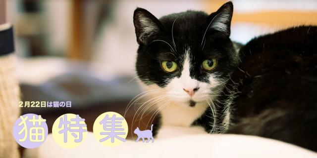【2月22日は猫の日!猫×デザイン特集】SNSでも話題の「黒猫のアートな首輪」制作者、木野聡子インタビュー&保護猫たちが働く会社「LOVE & Co.」インタビューほか