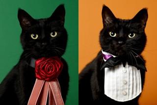 【2月22日は猫の日!猫×デザイン特集】SNSでも話題!「黒猫のアートな首輪」制作者、木野聡子インタビュー