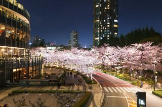 お花見2020/アートもお花見も楽しむ魅力的なスポット4選!すぐそばに桜の名所がある美術館や、桜を体験できるイベントも【春のアートなお出かけ】