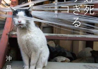 5万部突破のベストセラー写真集がオリジナルグッズに!「必死すぎるネコ」雑貨の販売開始