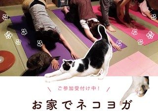 楽しく運動不足解消! ネコを愛で放題のヨガ教室「オンラインネコヨガ」開講