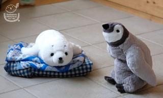 ヴィレヴァン、膝にのせて癒やされるペンギンとアザラシのぬいぐるみが登場