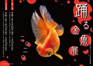 夏の風物詩の金魚が優雅に泳ぐ一瞬の美しさに注目した「踊る金魚展 2020」
