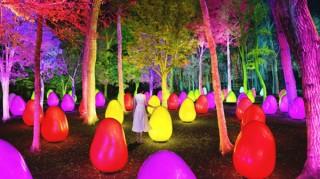 チームラボによる常設展示「どんぐりの森の呼応する生命」が8月1日オープン