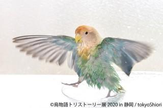 """鳥の""""一瞬の美しさ""""をテーマにした合同写真展&物販展「鳥物語トリストーリー展 2020」"""
