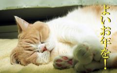 「怒ってなどいない!! 」怒り顔の猫・小雪のフォトコラム
