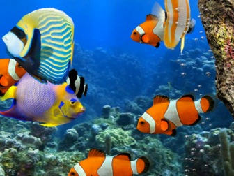 live wallpapers fish touch